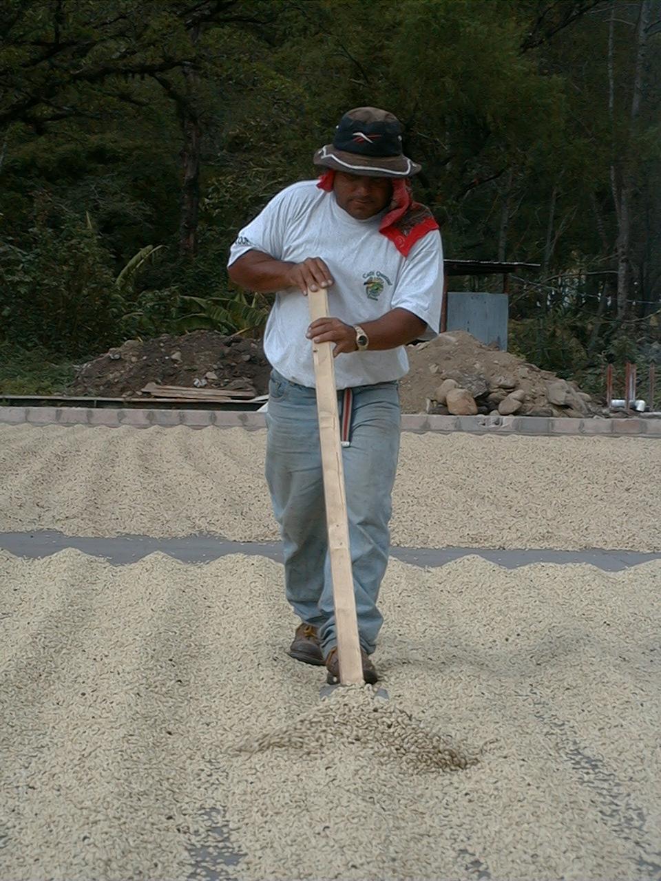 Gringo picker.jpg