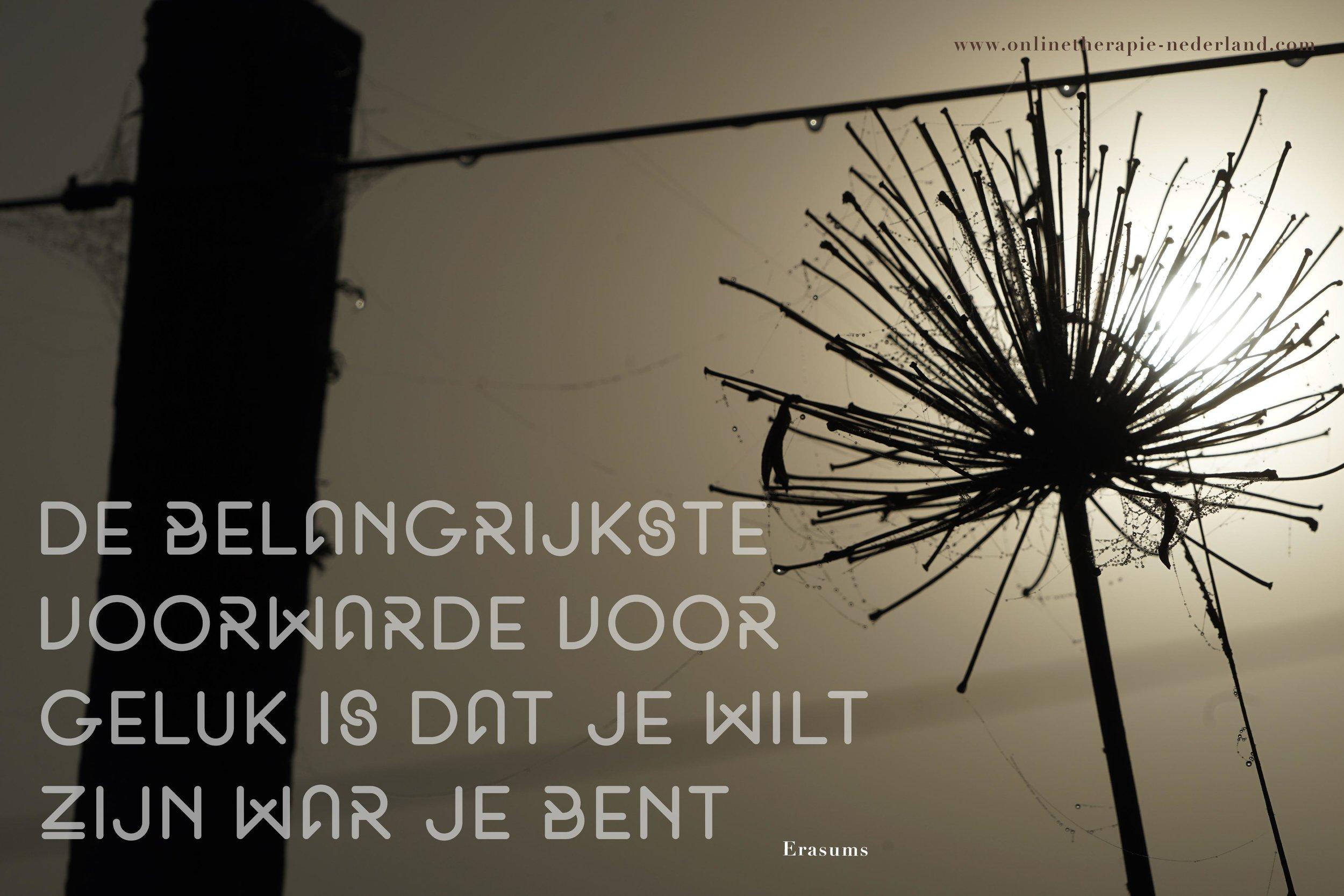 onlinetherapie-nederland-06.jpg