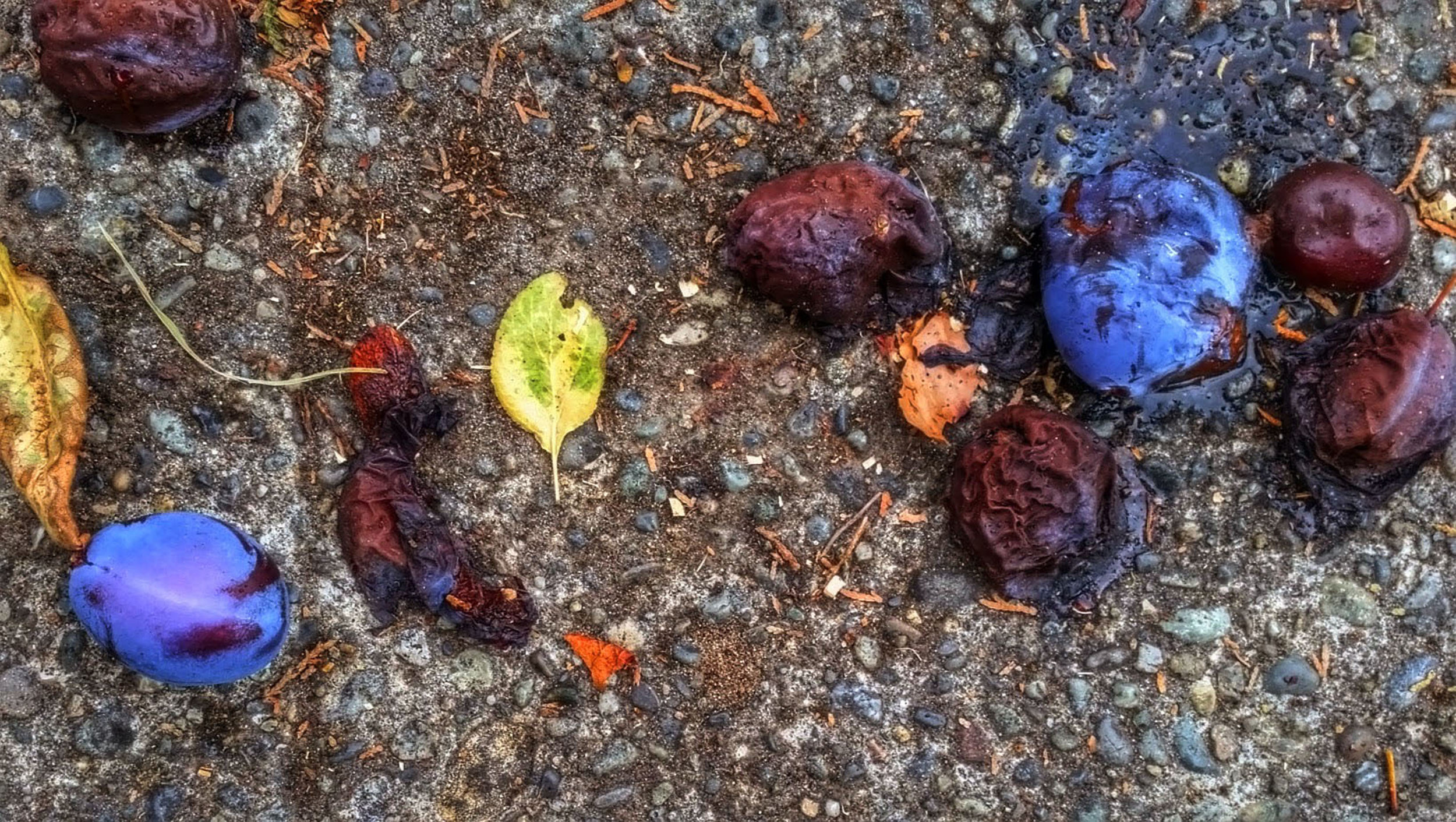 One Plum , Digital photograph