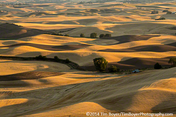 Harvested fields from Steptoe Butte.Golden light filtered through the end of a dusty day.