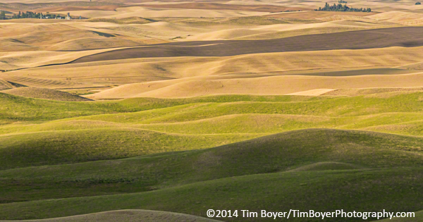A mix of harvested wheat and green fields from Steptoe Butte.