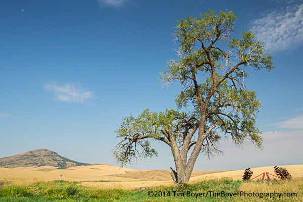 Steptoe Butte and  a lone tree.