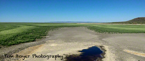 Lake Malheur from the Narrows June 2015