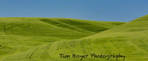 Wheat Patterns and blue skies.