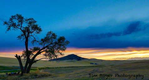 Steptpe Butte and the Baylor Road Tree after sunset.