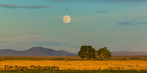 From near the Refuge Headquarters a full moon rises over the landscape.