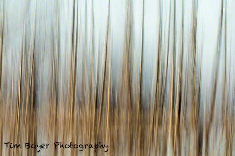 Blurred landscape. 1/15 of a second at f/25 and ISO 100 7D Mark II and the  100 to 400 zoom at 400 mm.
