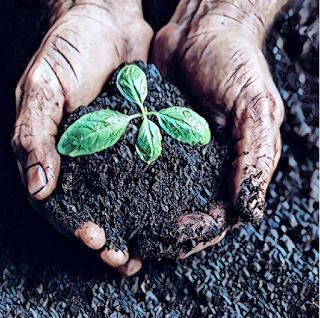 Image from Tufts University Composting Program