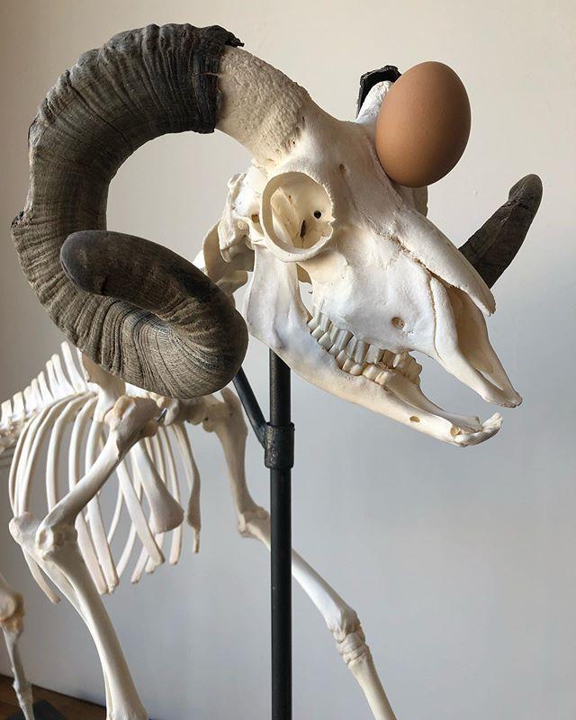 world_record_ram.  bone, egg, steel.  2019.