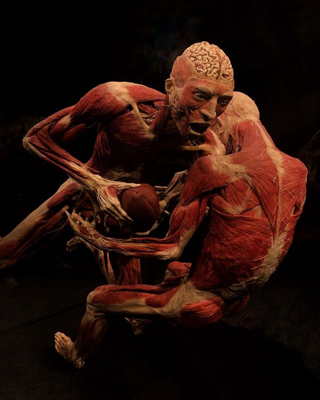 This has been on my list forever!  Body World and The Cycle of Life @museumofscience #bodyworld