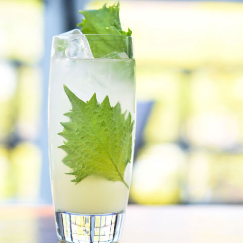 mocktail in a tall glass with mint leaves and ice cubes