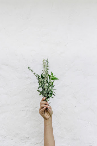 A hand holds a cluster of greenery up in front of a white wall