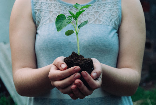 A woman holds her cupped hands in front of her, in them a small plant, rooted in dark soil