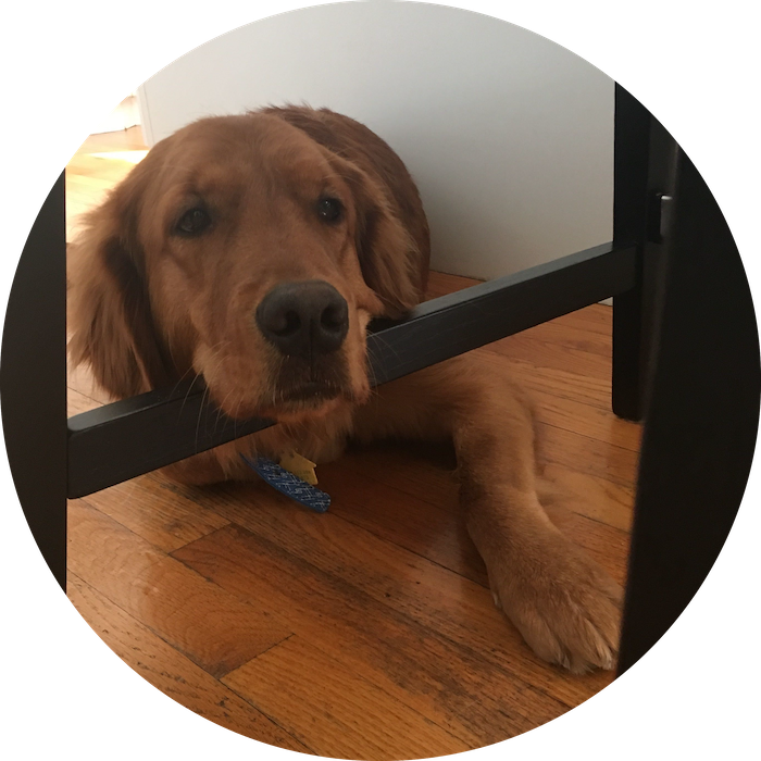 A golden retriever with his head propped on a table leg