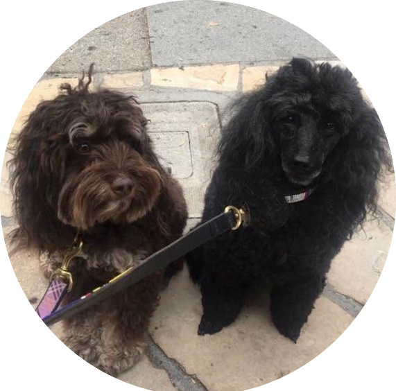 Recovery coach Sherrie's two fluffy dogs