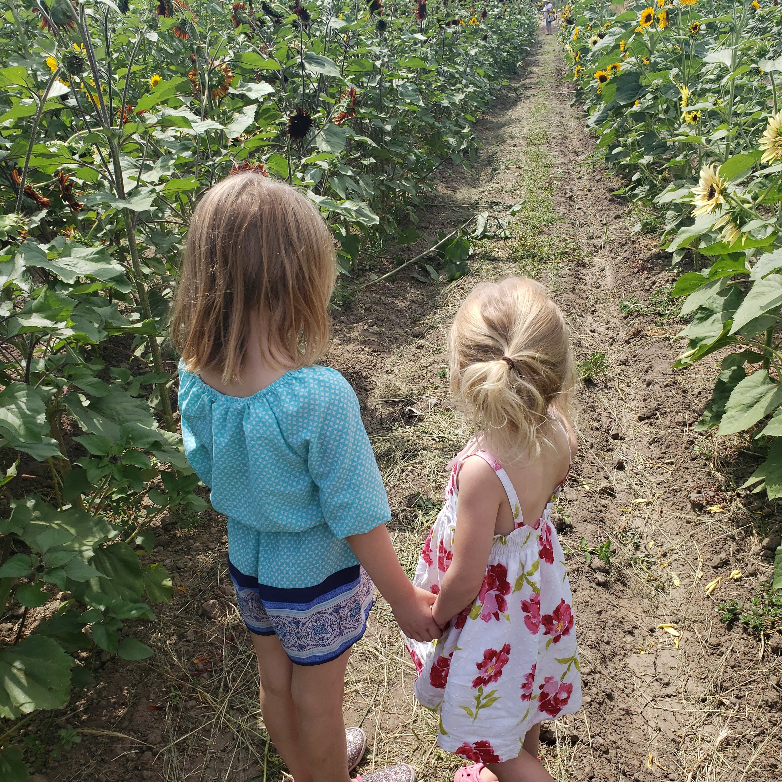 Two small girls, standing in a garden full of sunflowers