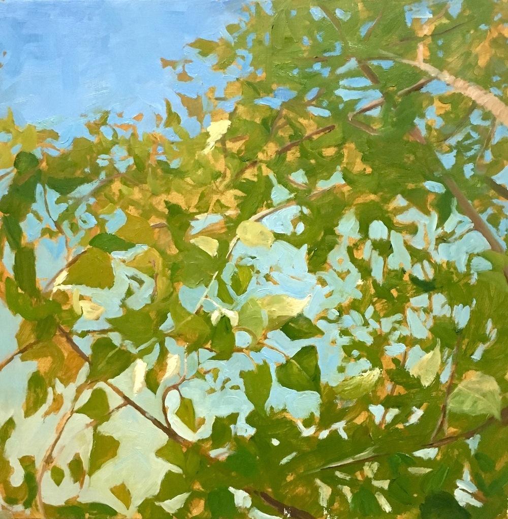 7. Native; Populus  nigra (Poplar), 18%22x18%22, oil on canvas (2016).jpg