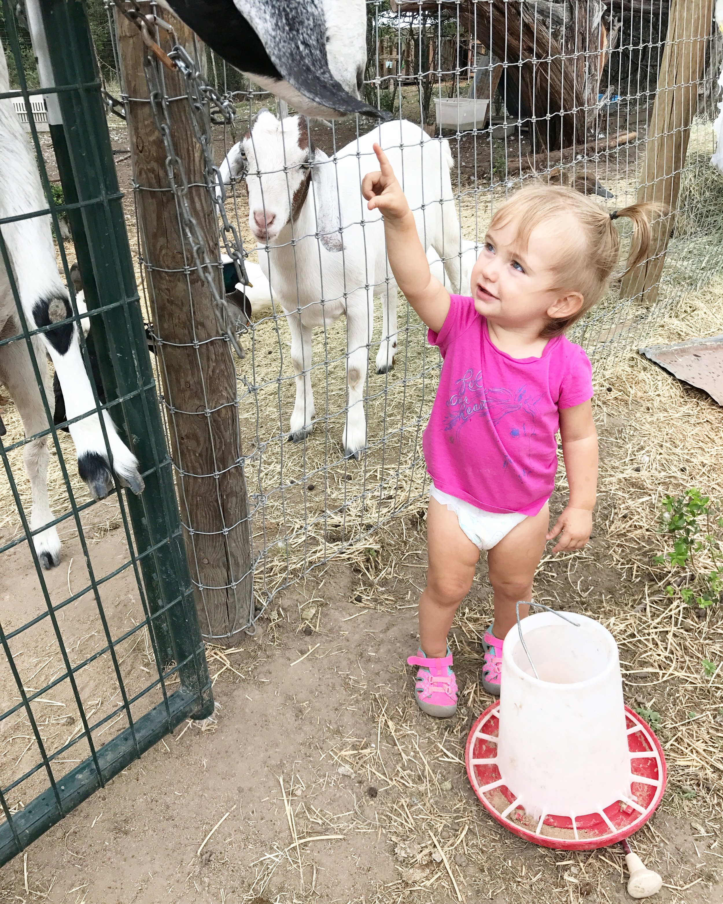 Baby and Goat.JPG
