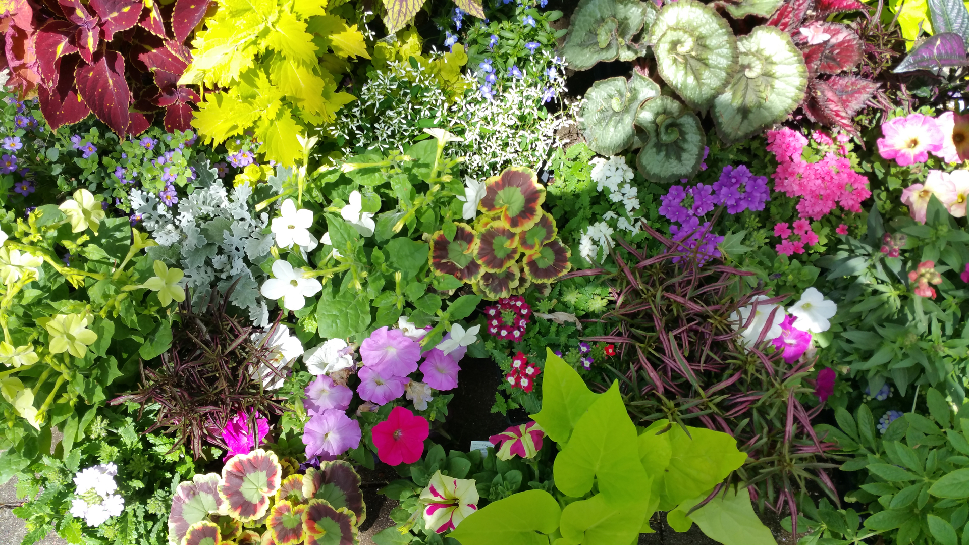 Garden-Club.jpg