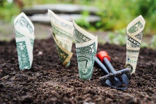 money growing in dirt.jpg
