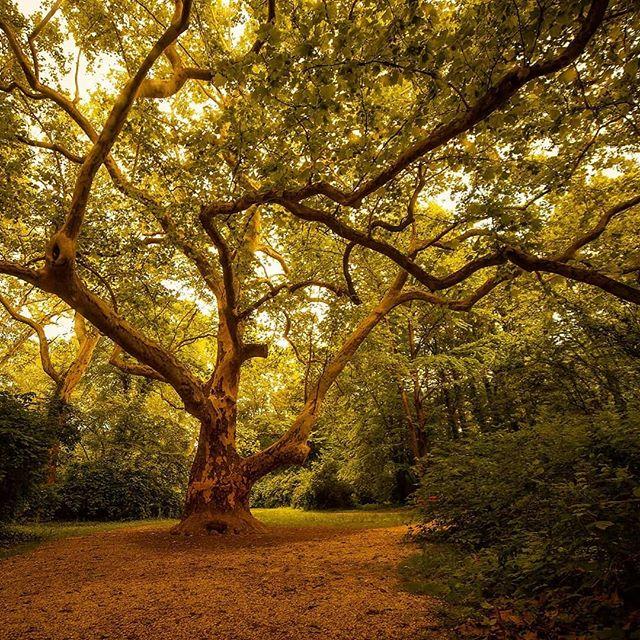 #nature #naturephotography #landscape #tree