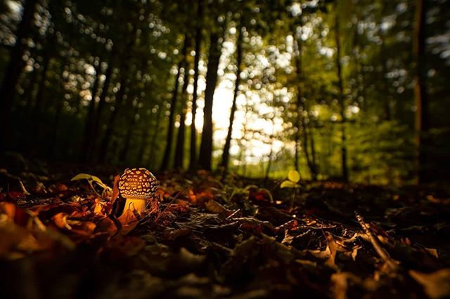 #nature #naturephotography #landscape #forest #mushroom #hungary #szalafő