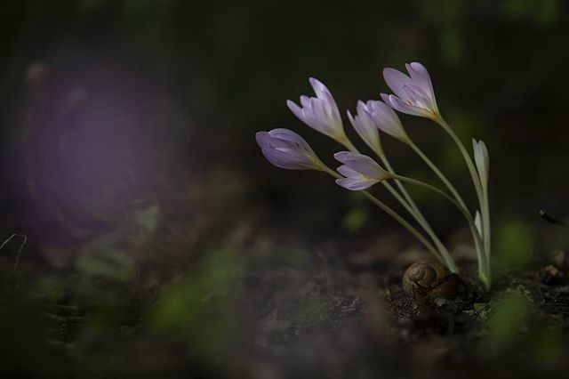 #nature #naturephotography #flowers #forest #crocus