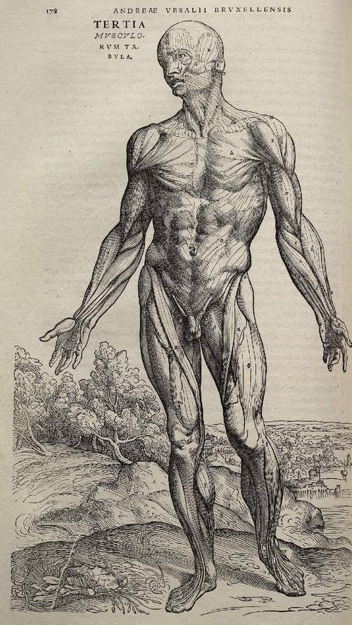 Les Pathologies Traitées - Troubles d'origine vertébraleNévralgies d'Arnold, névralgies cervico-brachiales, torticolis, cervicalgies, dorsalgies, douleurs intercostales, lumbagos, lombalgies, cruralgies, sciatalgies, pubalgies.Troubles de l'appareil locomoteurEntorses, foulures, tendinites (dont tennis et golf-elbows), canal carpien, canal tarsien, douleurs articulaires, épines calcanéennes, algodystrophies.Troubles O.R.L.Sinusites, rhinites, rhinopharyngites, otites séreuses, vertiges bénins paroxystiques.Troubles digestifsBallonnements, aérophagie, digestion lente, reflux gastro-oesophagiens (hernies hiatales), colopathies fonctionnelles (constipations, diarrhées), troubles hépatobiliaires, hémorroïdes.Troubles circulatoiresPalpitations, oppressions thoraciques, jambes lourdes, maladie de Raynaud.Troubles respiratoiresTrachéites, bronchites, asthme.Troubles urinairesCystites, troubles de la prostate, incontinences, énurésies.Troubles gynécologiquesNormalisation du cycle, règles douloureuses, certaines formes d'infertilité, troubles de la ménopause, descente d'organes.Troubles de la GrossesseNausées, vomissements, lombosciatiques, préparation à l'accouchement.Troubles générauxCéphalées, migraines, insomnies, anxiétés, zona.