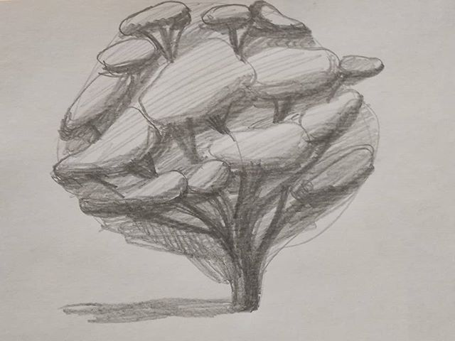 Tree study.  #tree #trees #drawing #drawingstudy
