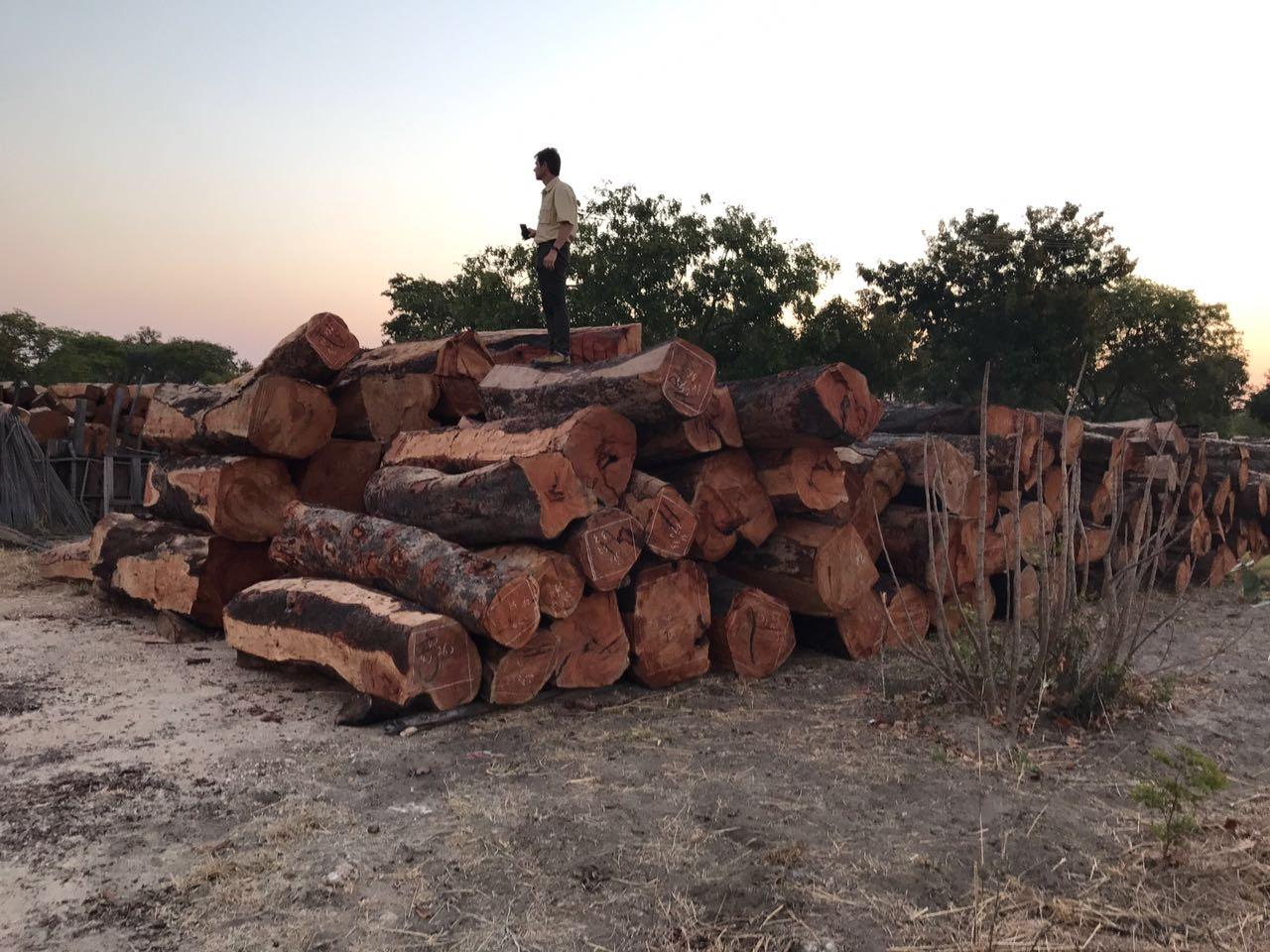 Felled hardwoods.JPG