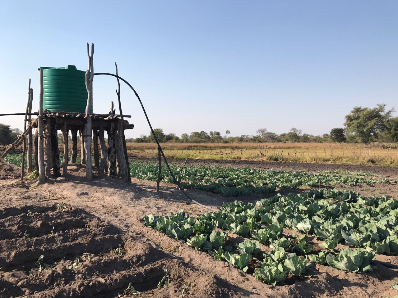 Community Agriculture