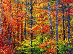 blog-Bright-fall-foliage-autumn-in-New-Hampshire.jpg