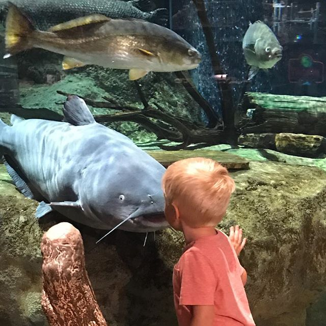 Hayden the son of @michaelmichelli Luck E Strike's Director of Mktg showing the catfish who is boss! @bassproshops.  #luckestrike #builtforthefight #rc2 #livemotion #americanoriginals  #Fishing #WeFish #Lures #USA #Outdoors #Nature #Bass #BassFishing #Fish #Outside #Love  #Follow #BassMaster #LargeMouth #SmallMouthBass #InstaFish #Beautiful  #Lake #luckestrike #BigFish #Fisherman #LiveToFish #Family #Angler