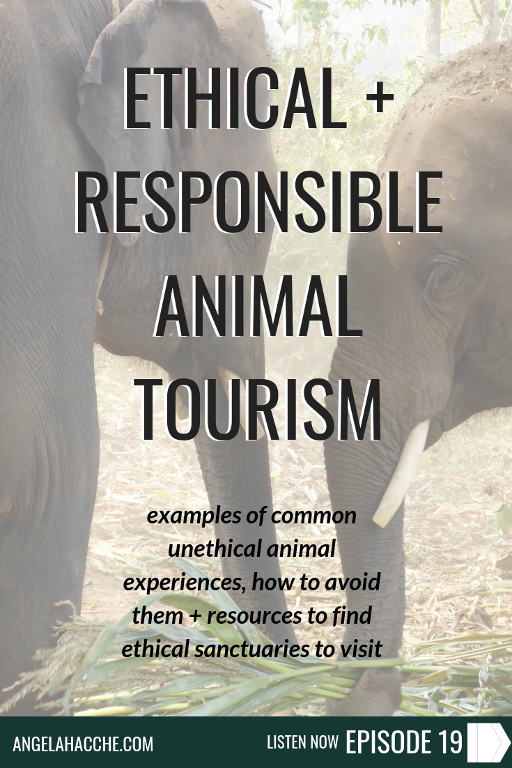 Ethical + Responsible Animal Tourism: Examples of Common Unethical Animal Experiences, How to Avoid Them + Resources to Find Ethical Sanctuaries to Visit