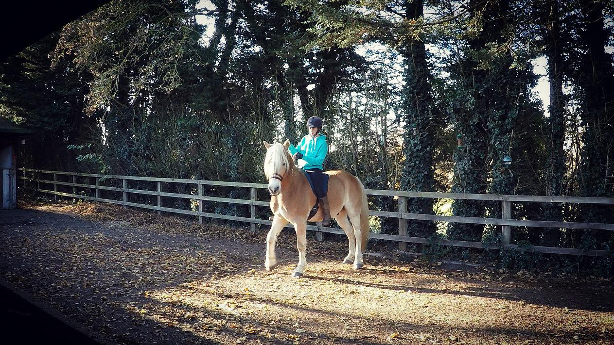 5 minute exercises for a healthy, happier horse!