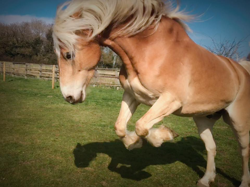 A common cause: quite often a horse will display unwanted behaviour for a simple reason; pain, discomfort, insecurity or fear.