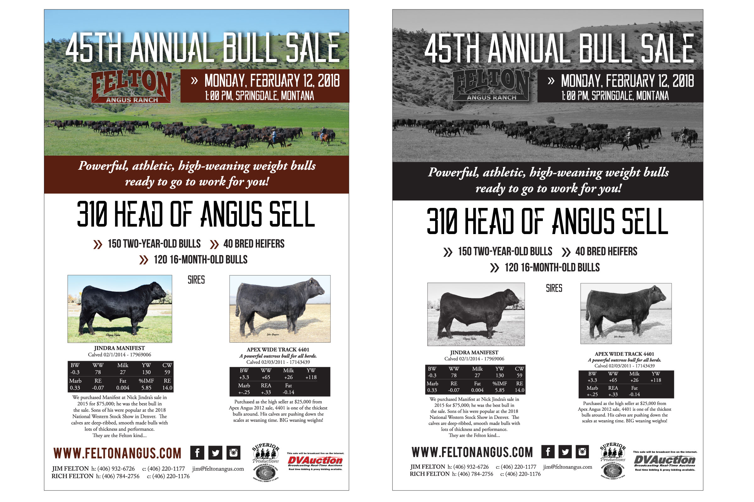 "Felton Angus Ranch  has been raising angus cattle since 1952. Located in Springdale, Montana, they hold their annual production sale in February. It's fast approaching and I enjoy every moment of ""bull sale craziness"" - Susie's words - with them; which for me is designing ads and some email marketing."
