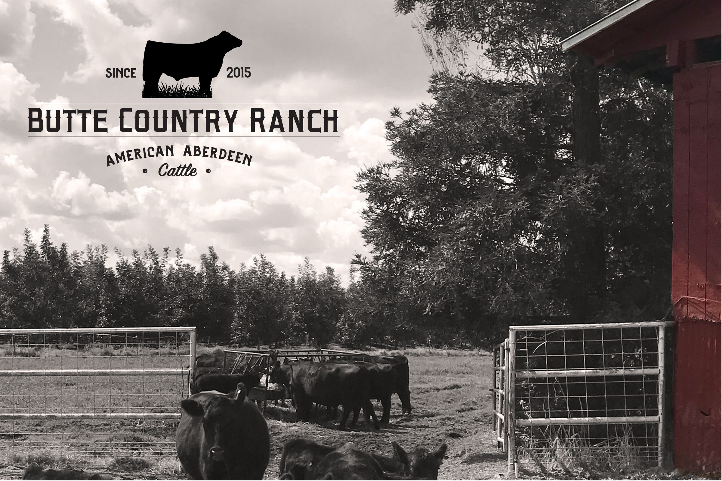 A newly designed cattle ranch logo for Butte Country Ranch in Northern California by graphic designer Sara Landis.