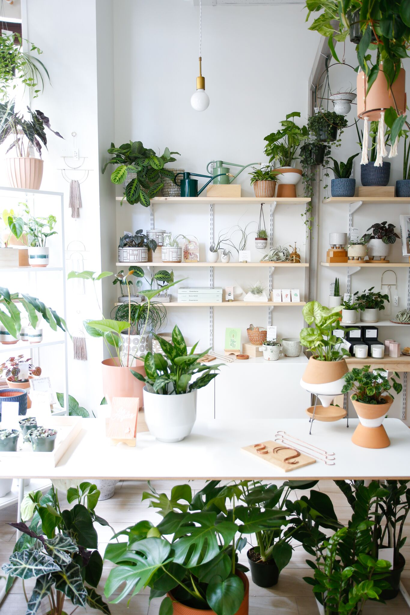The Chic Houseplants You Should Be Buying in 2018 -