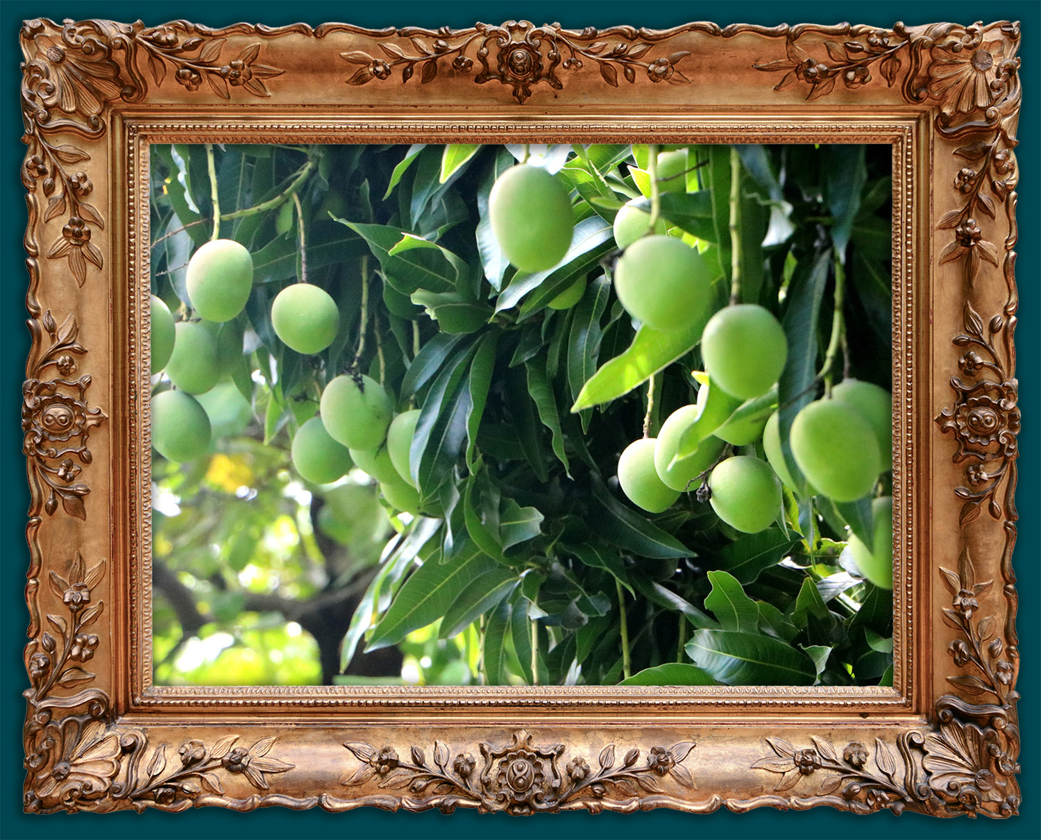 Fresh soursops in our farms