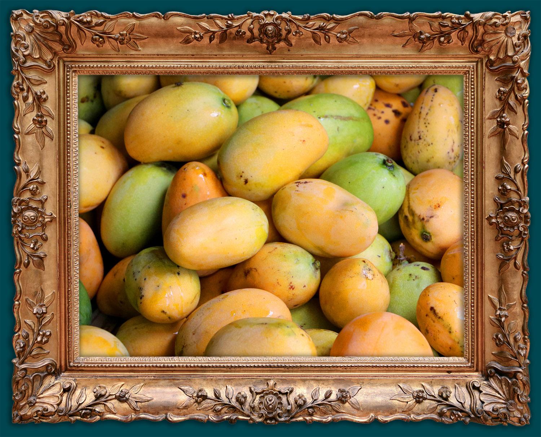 Ripening mango harvest