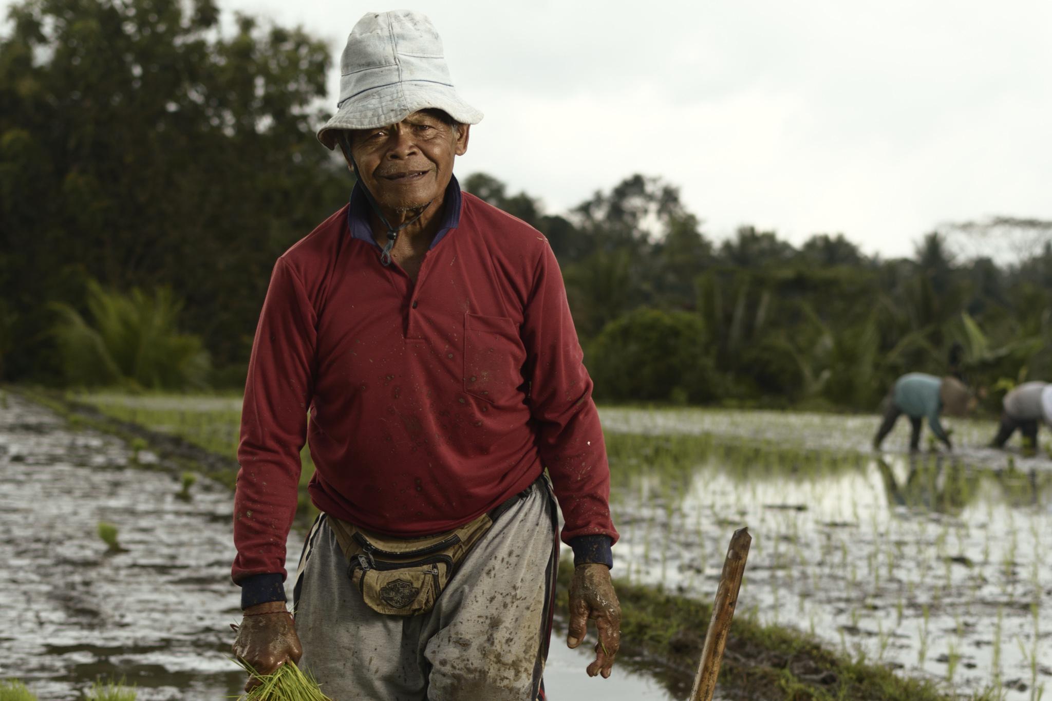 A farmer working the fields. Tabanan regency of Bali.