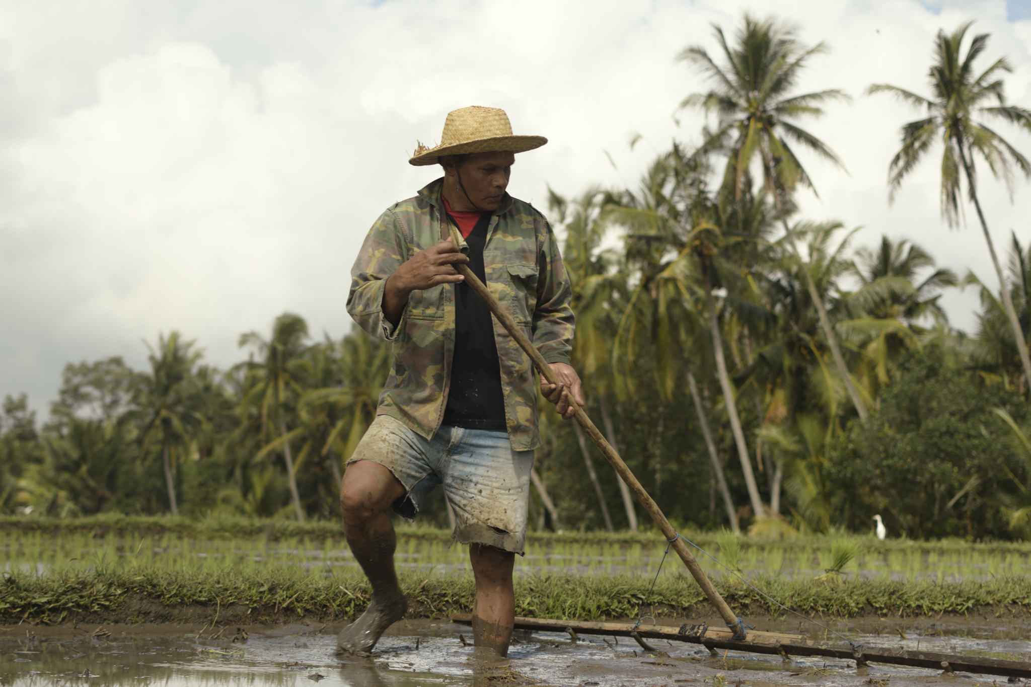 A farmer rakes the rice fields to prepare for soil for the planting of rice,