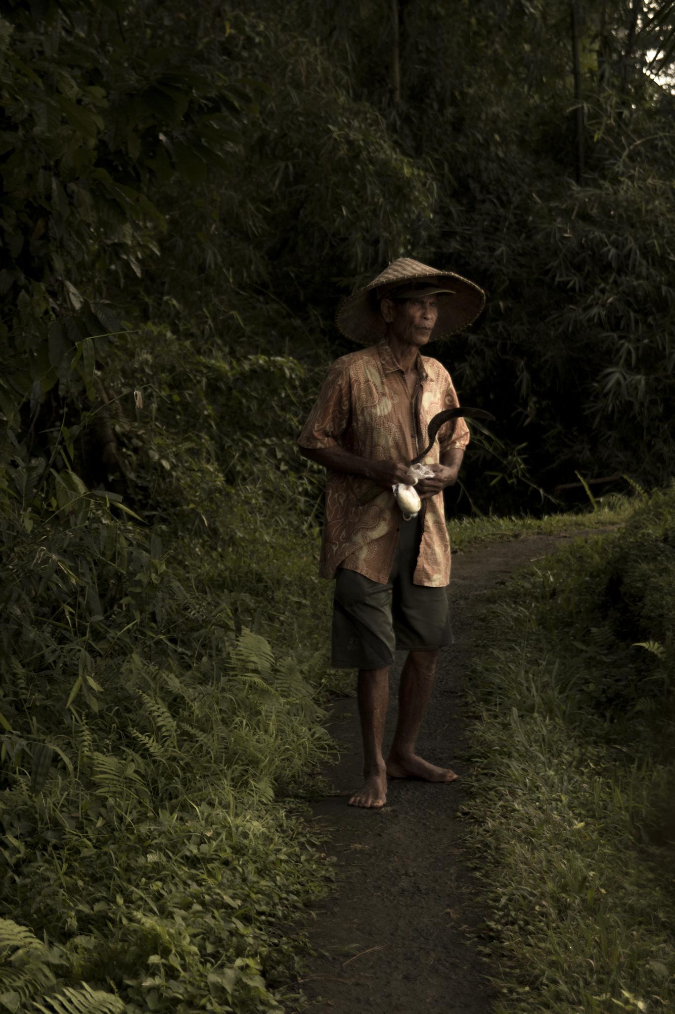 Farmer, Jegu Penebel, Bali, Tabanan