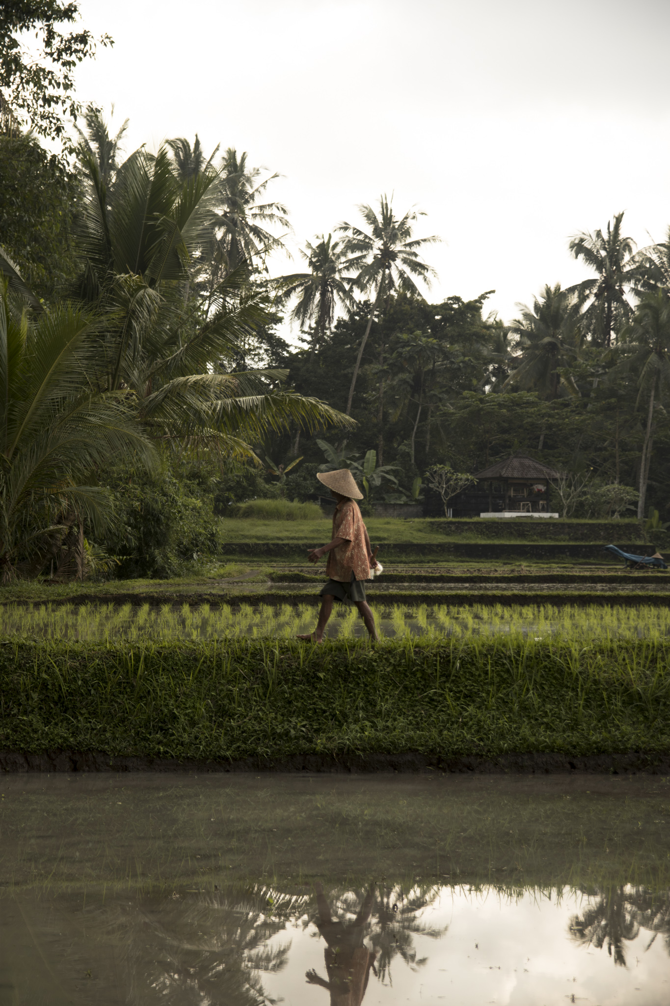 Rice is the lifeblood of the people of Bali, and has been a staple of their livelihood and diet since the 8th century.