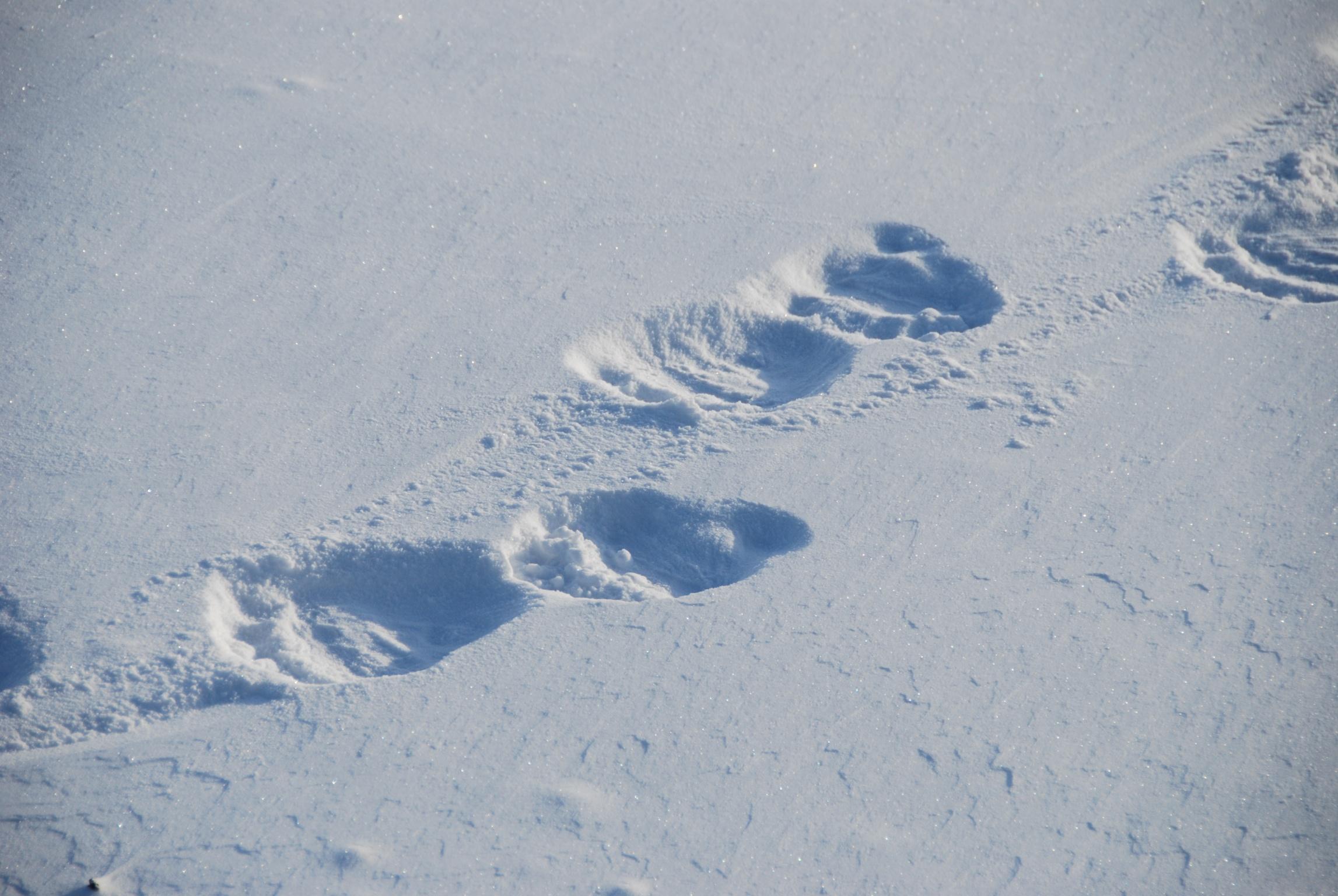bear paw prints.jpg