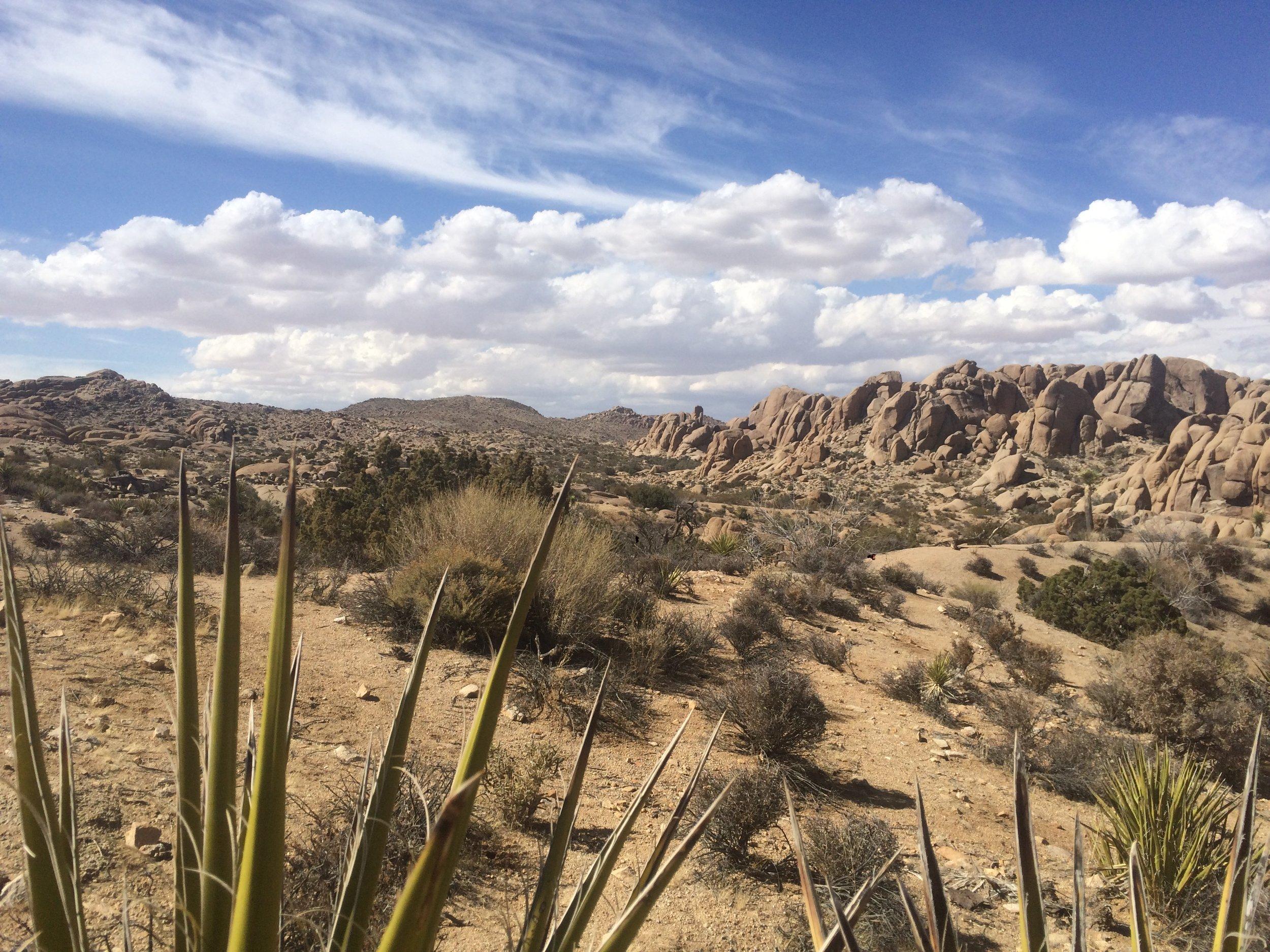 The dry desert landscape of Joshua Tree is full of surprises.