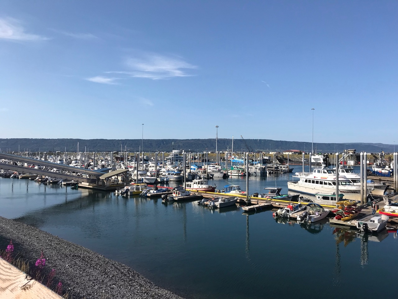 Homer Boat Harbor. We saw multiple seals and sea otters in the harbor itself.