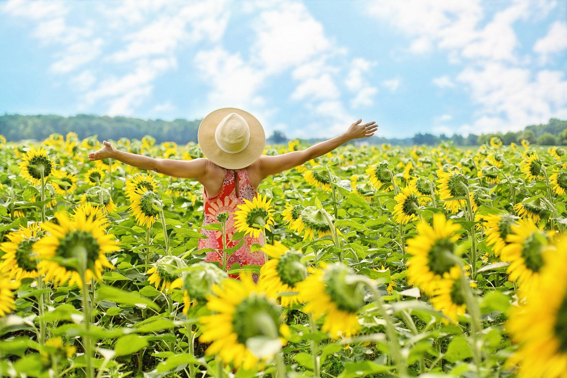 sunflowers-3640938_1920.jpg