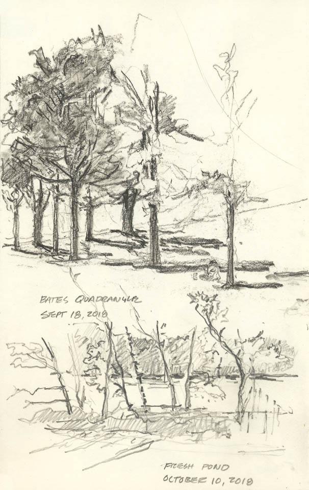 Tree Study, Graphite on Paper